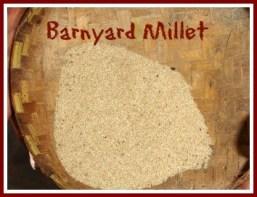 Sama ke chawal-Barnyard millet