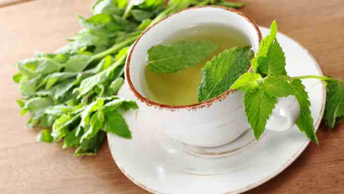 Spearmint Tea With Fresh Leaves