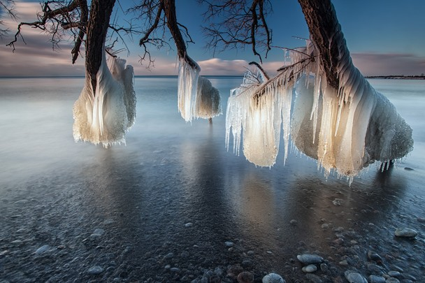 Tree of Ice