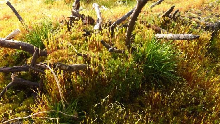 mmm... lovely bit of moss