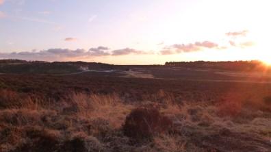 golden grasses in the sunset