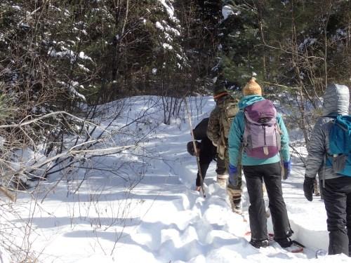 Moose trail