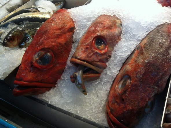 Think these are snappers?