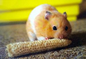 Note..Hamster got more forking food.....