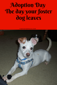 Adoption Day – The day your foster dog leaves
