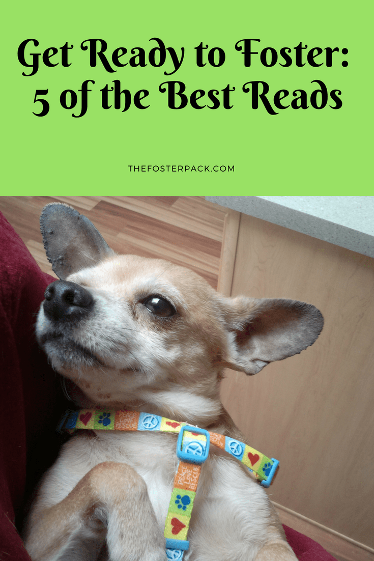 Get Ready to Foster: 5 of the Best Reads
