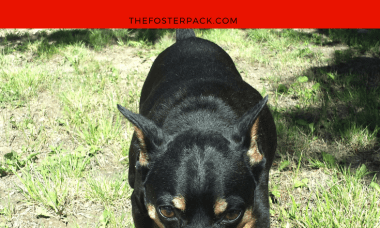 The 6 Main Personality Types of Dogs Personality Type #6: Independent Dogs