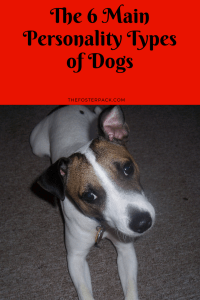 The 6 Main Personality Types of Dogs