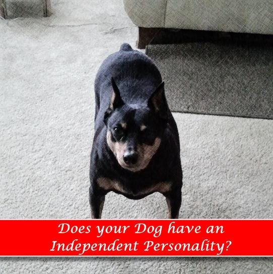 Personality Types: Independent Dogs