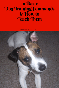 10 Basic Dog Training Commands & How to Teach Them