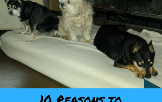 10 Reasons to Adopt Older Dogs