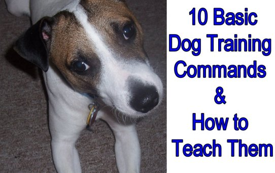 10 Basic Dog Training Commands & How to Teach Them