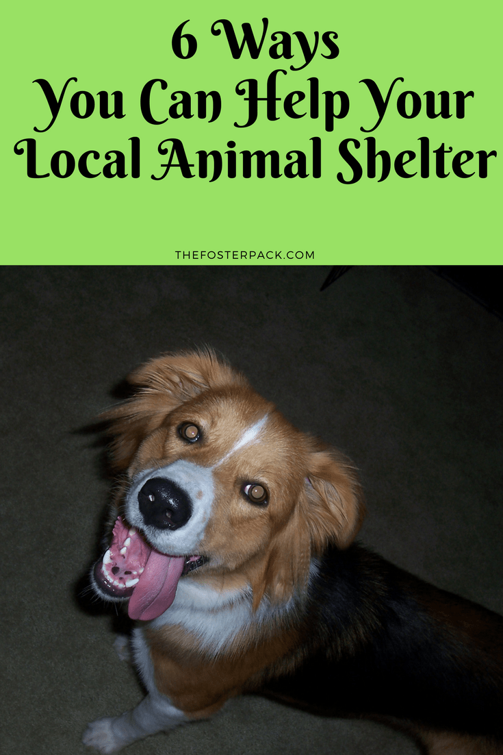 6 Ways you can help your local animal shelter