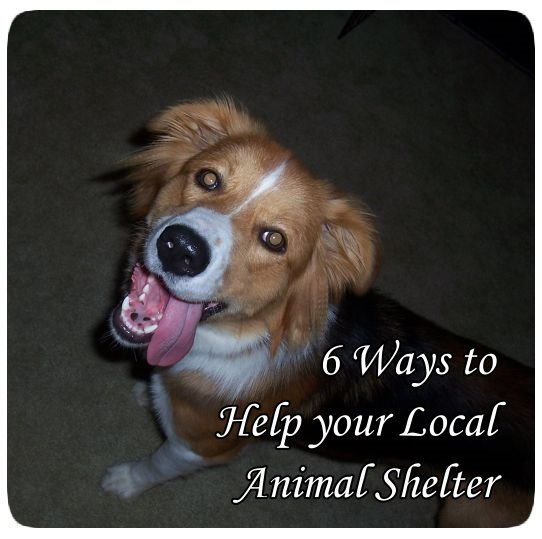 6 Ways to Help Your Local Animal Shelter