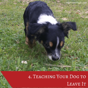 Teaching Your Dog to Leave It
