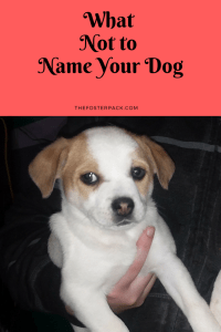 What Not to Name Your Dog