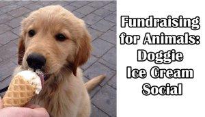 Fundraising for Animals: Doggie Ice Cream Social