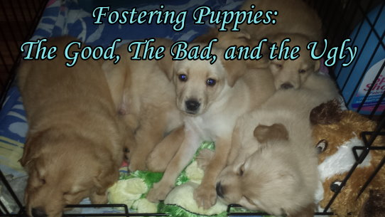 Fostering Puppies: The Good, The Bad and The Ugly