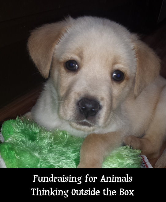 Fundraising for Animals: Thinking outside of the Box