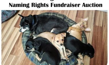 Fundraising for Animals: Naming Rights Fundraiser Auction