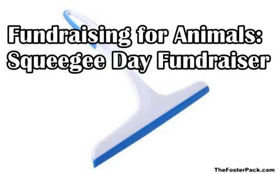 Fundraising for Animals: Squeegee Day Fundraiser