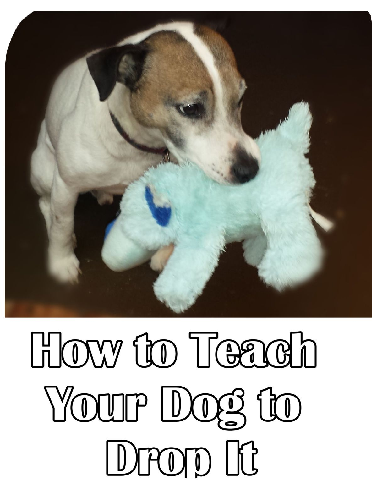 How To Teach Your Dog to Drop It
