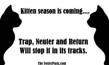 Trap, Neuter and Return - Kitten season is coming.