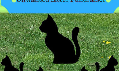 Fundraising for Animals: Unwanted Litter Fundraiser