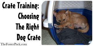 Crate Training: Choosing The Right Dog Crate