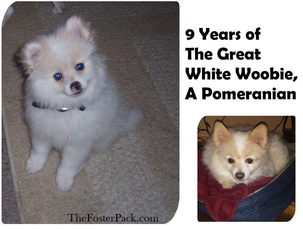 The Great White Woobie, A Pomeranian