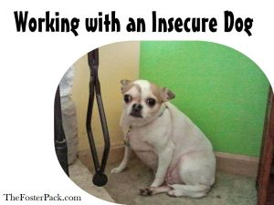 Working with and Insecure dog.