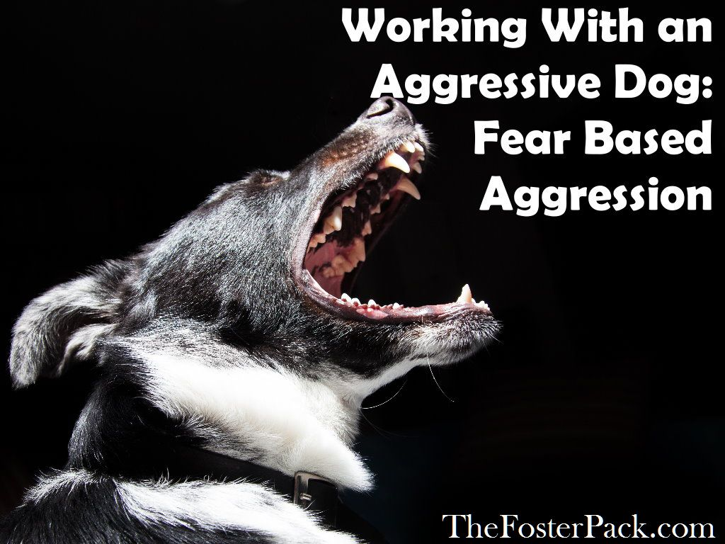Working With an Aggressive Dog: Fear Based Aggression