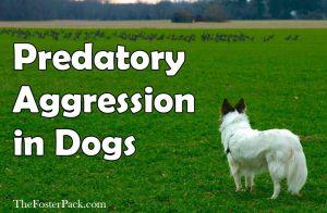 Predatory Aggression in Dogs