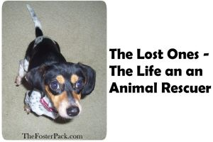 The Lost Ones - The Life an an Animal Rescuer