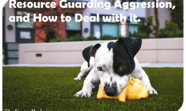 Resource Guarding Aggression, and How to Deal with it.