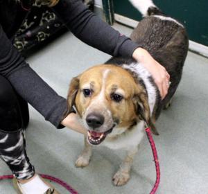Meet Shelby, a long term shelter resident