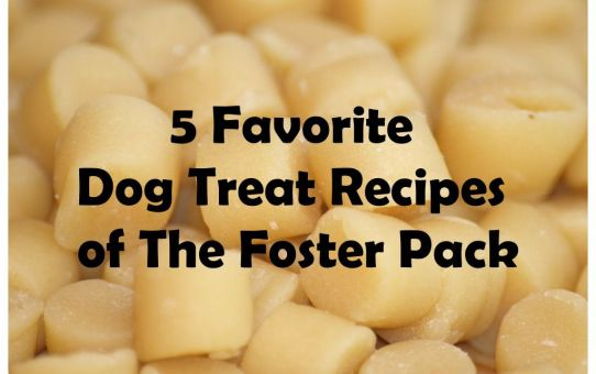 5 Favorite Dog Treat Recipes of The Foster Pack