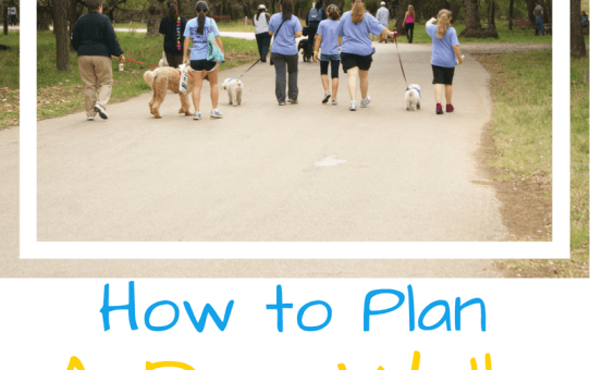 How to Plan a Dog Walk Fundraiser