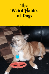 The Weird Habits of Dogs