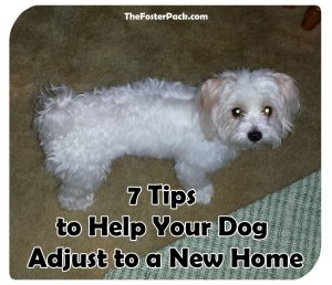 7 Tips to Help Your Dog Adjust to a New Home