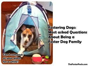 Fostering Dogs: Most asked Questions About Being a Foster Dog Family