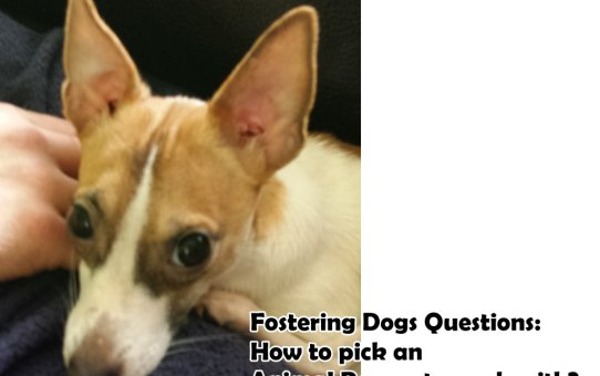 Fostering Dogs Questions: How to pick an Animal Rescue to work with?