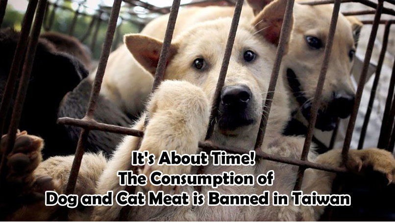 It's About Time! The Consumption of Dog and Cat Meat is Banned in Taiwan