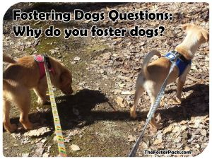 Fostering Dogs Questions: Why do you foster dogs?