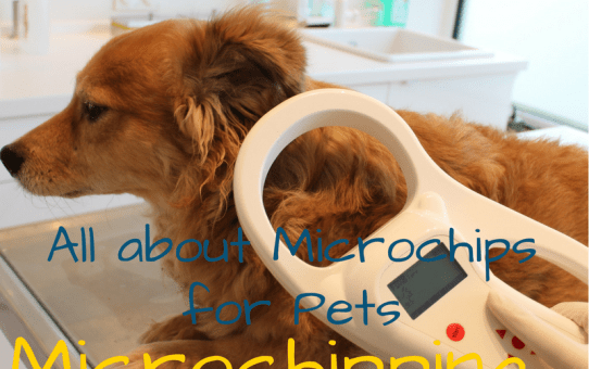 Microchipping, Why you Should Microchip your Pets