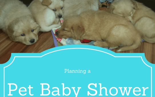 Planning a Pet Baby Shower Fundraiser