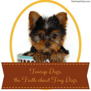 Teacup Dogs, the Truth about Tiny Dogs