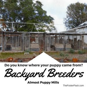 Backyard Breeders - Almost Puppy Mills