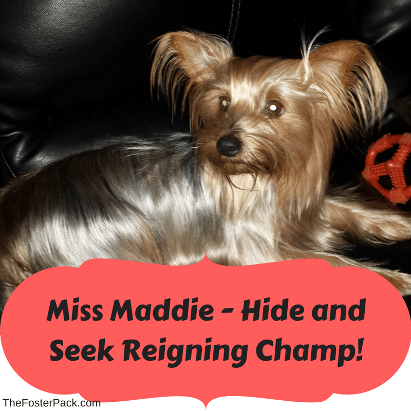 Maddie - Hide and Seek Reigning Champ!