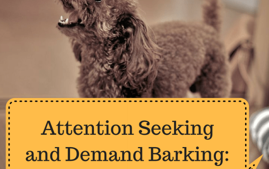 Attention Seeking and Demand Barking: How to End it